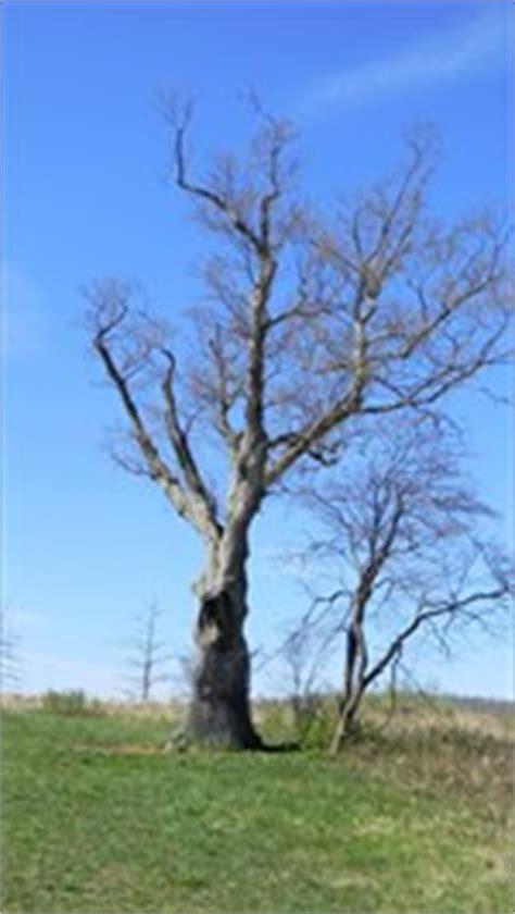 7 cherry tree ridge nj the s tree basking ridge nj story locations on waymarking
