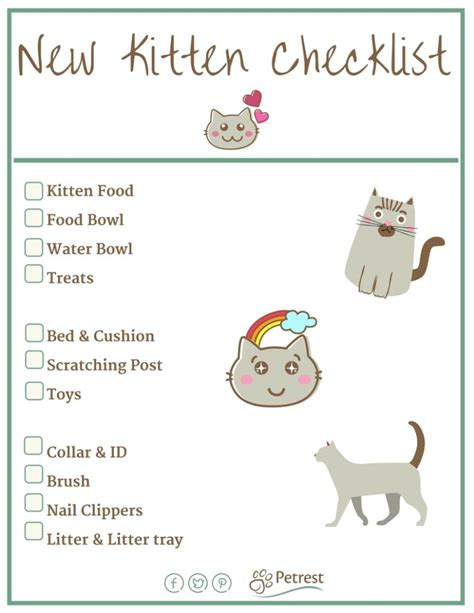 new kitten checklist everything you need to petrest