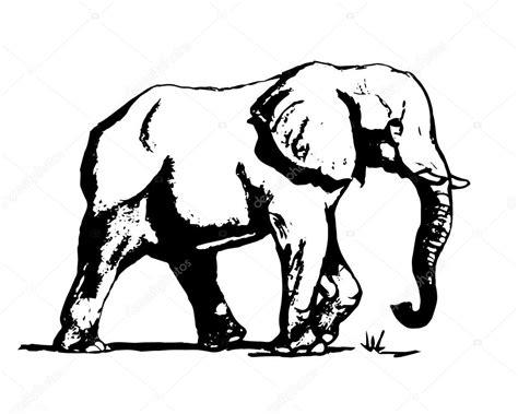 clipart bianco e nero elefante in bianco e nero 01 vettoriali stock 169 mila