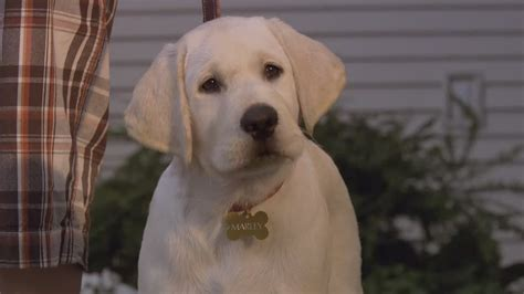 marley and me the puppy years marley me the puppy years 2011 imdb rachael edwards