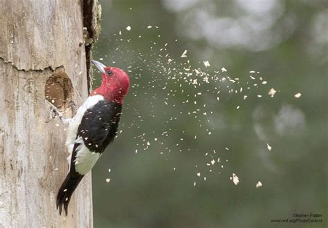 8 wonky and wonderful woodpecker adaptations the