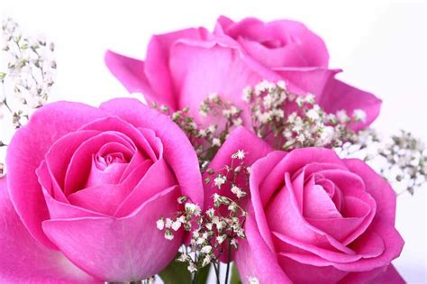 most beautiful pink roses hd wallpapers flowers pictures hd hd beautiful pink rose flowers wallpapers most single