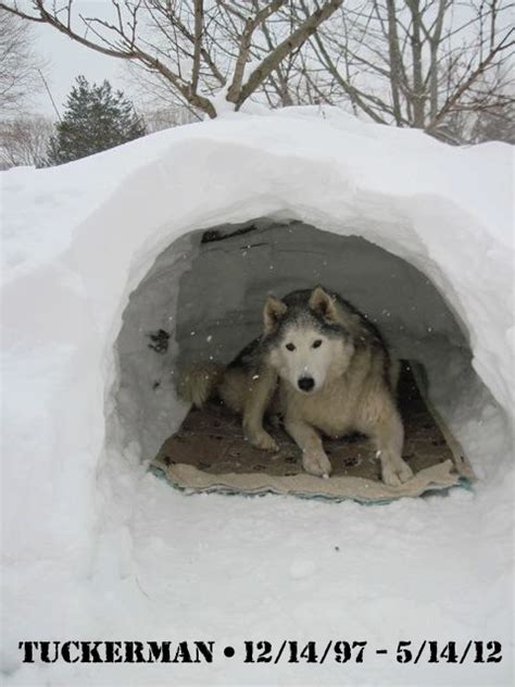 best way to insulate a dog house best way to insulate dog house or keep my dogs warm update w pics page 1 ar15 com