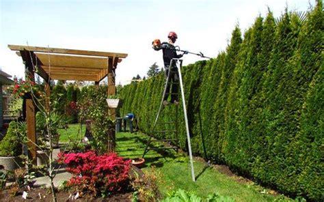 Giardiniere Torino Giardiniere Potatura E Manutenzione Giardino A Torino
