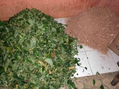 Pupuk Kotoran Sapi Kering membuat kompos dari sah organik dan kotoran sapi