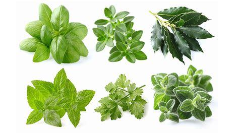 erbe aromatiche in cucina benefici delle erbe aromatiche ii parte chef magazine