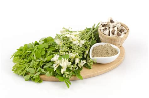 study moringa induces cancer cell death resetme