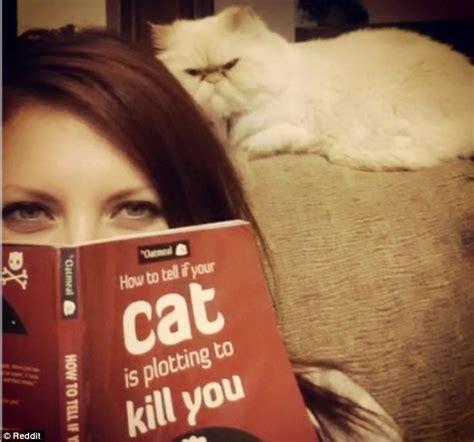 Cat Soon Meme - purr evil cats hilarious images showcase the world s most