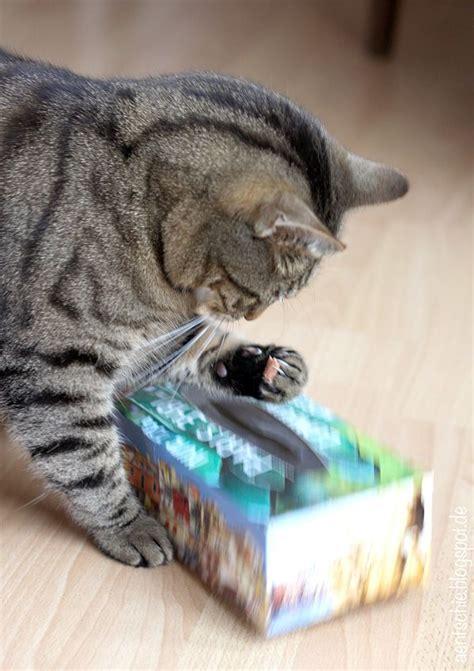 katzenspielzeug diy   babies katzenspielzeug