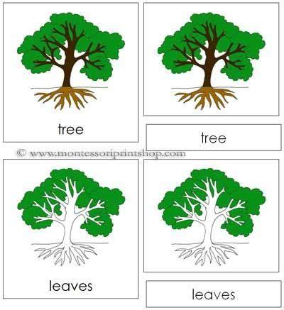Montessori Tree Printable   tree nomenclature cards printable montessori