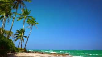 amazing tropical beach landscape  palm tree white