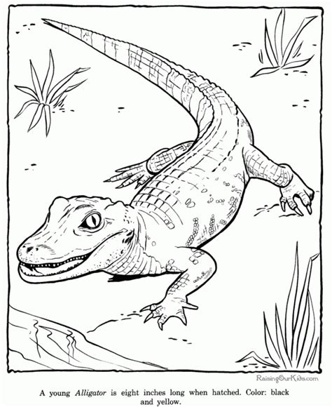 alligator coloring pages preschool crocodile cartoon face alligator coloring page