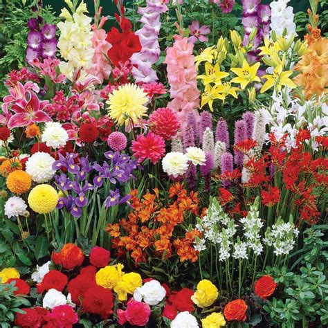 all year season mixed flower bulbs garden flowering perennial plant large range ebay