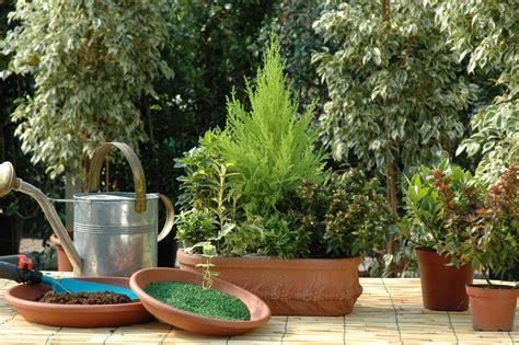 piante in terrazzo fiori e piante sul balcone in inverno idee e consigli
