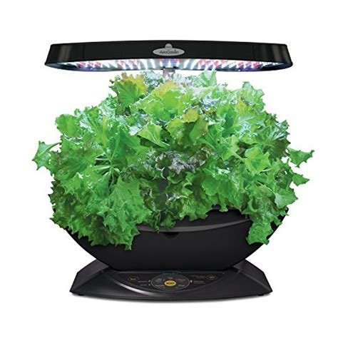 money growing starter plants container garden club