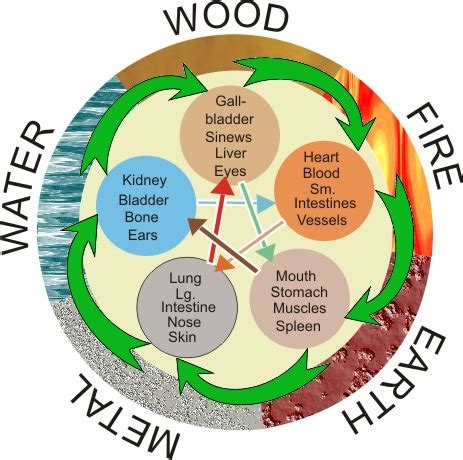 Five Elements Wood Element In Medicine Shiatsu The Of