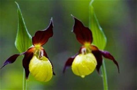 imagenes de flores asombrosas 10 de las flores m 225 s raras y extra 241 as del mundo