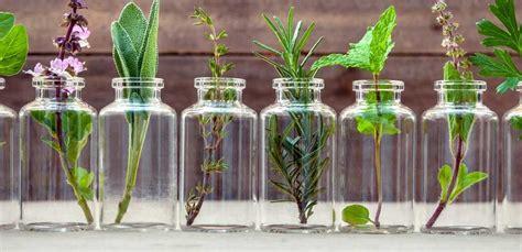 erbe aromatiche in cucina speciale erbe aromatiche come coltivarle e usarle in