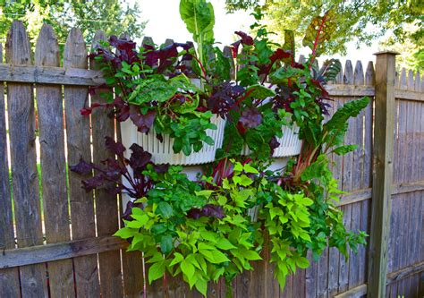 wall garden planter vertical garden planters are easy to install in shade