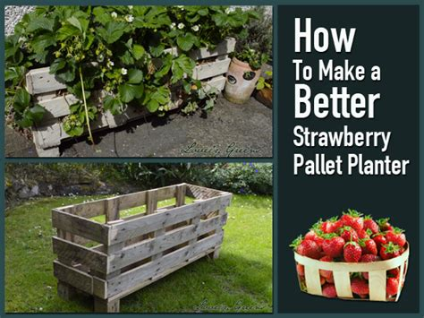 Build A Strawberry Planter by How To Make A Better Strawberry Pallet Planter Preparing
