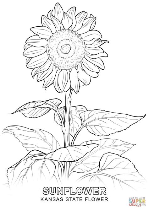coloring pages trees plants and flowers coloring pages trees plants and flowers coloring pages