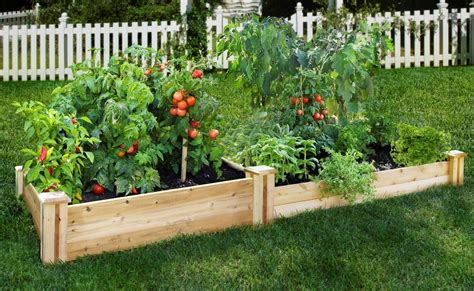12 pictures to start vegetable gardening in a raised bed