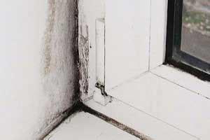 Schimmel An Holzfenster Entfernen 4547 by Schimmel Am Fenster So Entfernen Sie Den Schimmel Dauerhaft
