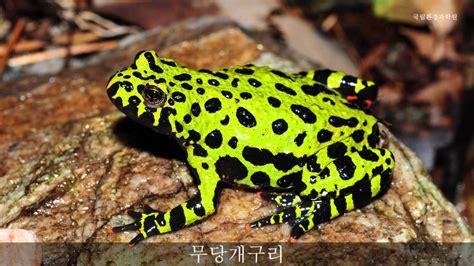 무당개구리 울음소리_Fire-bellied toad_sound_국립환경과학원 - YouTube