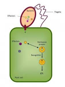 r proteins plants intelligent plants use proteins and rna to fight invaders