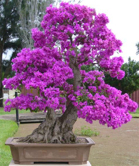 Creation Jardin Japonais Photos by Creation Jardin Japonais Photos 18 Un Arbre Bonsai La