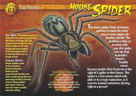 House Spider Wierd N Wild Creatures Wiki Fandom The House Of Tiny Terrors