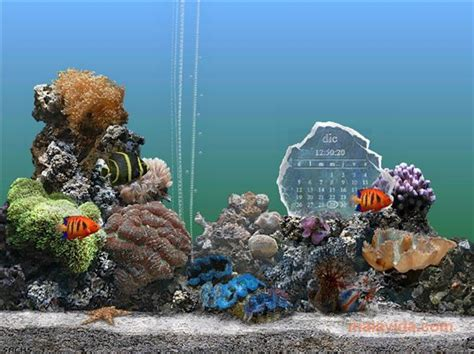 serenescreen marine aquarium download download serenescreen marine aquarium 2 6 kostenlos