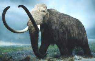 Extinct animals resurrected by cloning woolly mammoth