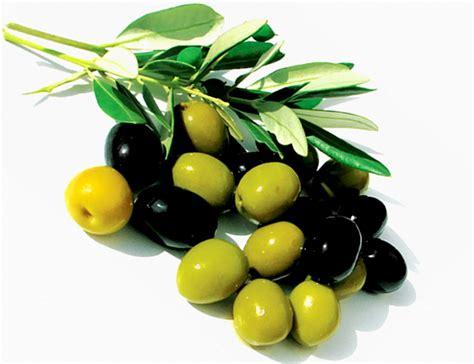 Minyak Zaitun Paling Kecil cara mudah perawatan kecantikan menggunakan minyak zaitun