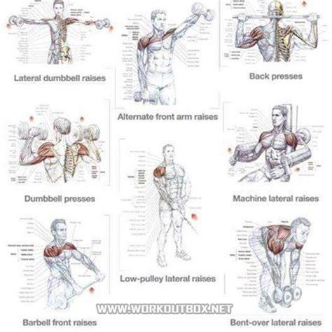 shoulder exercises healthy fitness workout tips