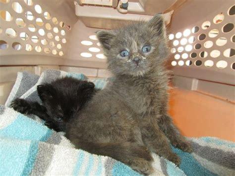 animal advocates bc cat rescue