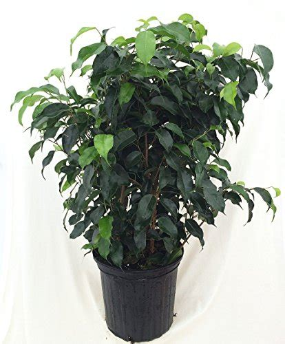 household plants air purifying household plants shopswell