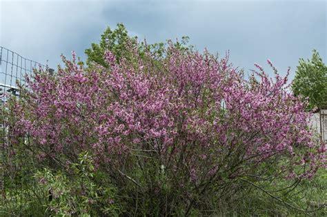 flowering shrubs zone 6 28 images winter shrubs