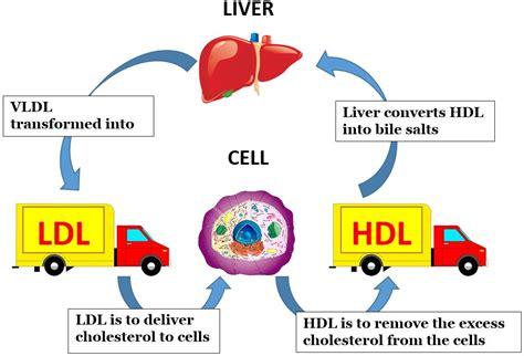 protein 0 cholesterol protein carb s cholesterol most misunderstood lipid