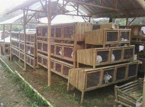 Harga Pakan Kelinci peluang usaha menguntungkan ternak kelinci cepat sukses