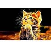 Cute Neon Kitten Wallpaper  Animals Better