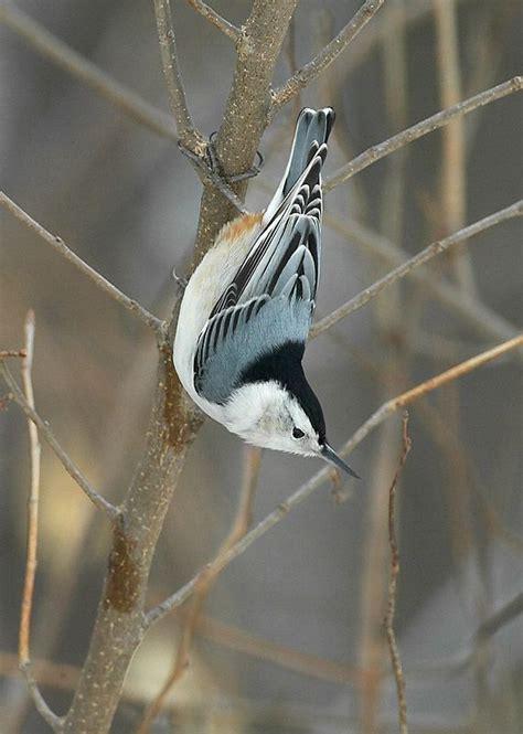 backyard bird watch m 225 s de 25 ideas incre 237 bles sobre bird watching en