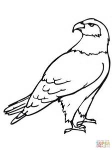 hawk coloring pages hawk bird coloring coloring
