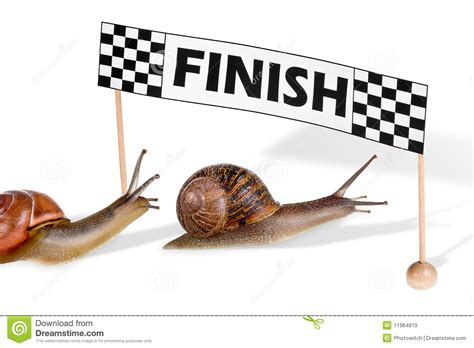 Sprint Plans racing snails royalty free stock images image 11964819