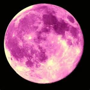 what is a pink moon magical pink moon a meditation for the moon en lunar