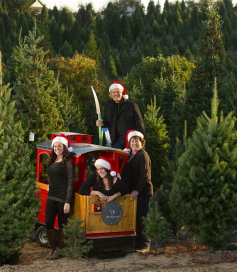 did your christmas tree shopping experience fall short on