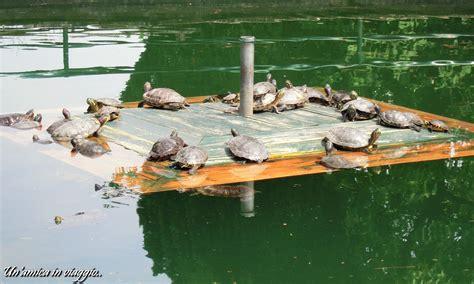 vasca tartarughe parco sigurt 224 tra e ninfee un amica in viaggio