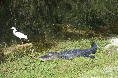 D 233 Couverte Du Promeneur D Oiseau Oiseaux Des Everglades A La D 233 Couverte Du Parc