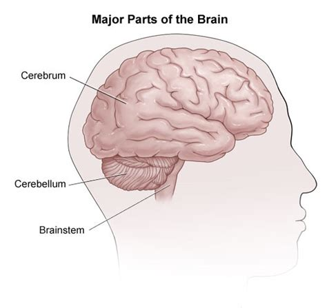 sections of the library and its functions multiple sclerosis research education whats an mri