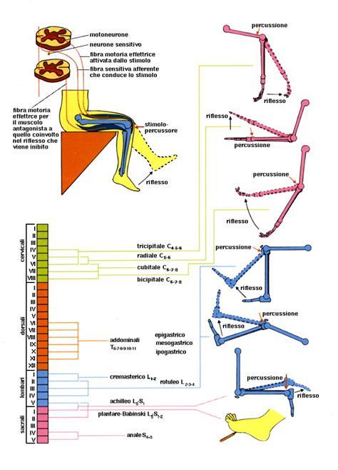 testo riflesso mulan legatura elastica delle emorroidi procedura ambulatoriale
